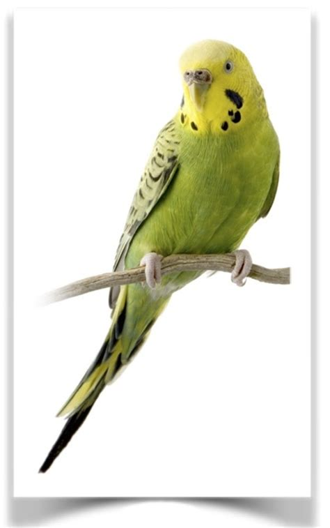 the finch farm birds for sale bird supplies pet