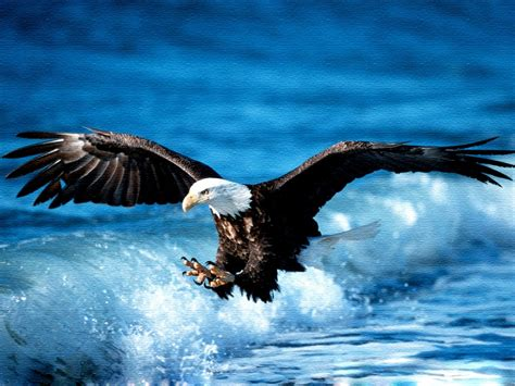 eagle birds wallpapers entertainment only