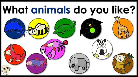 animals      animals colors