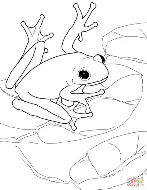 coloring pages of tree frogs american green tree frog coloring page free printable