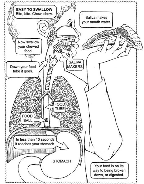human digestive system coloring worksheet coloring pages