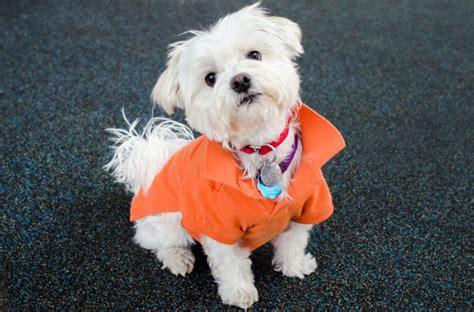 aspca dogs for adoption aspca