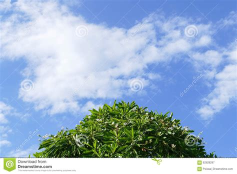 tree white flower cloud and blue sky for abstract