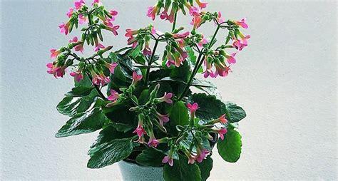 piante e fiori da appartamento fiori da appartamento piante appartamento come