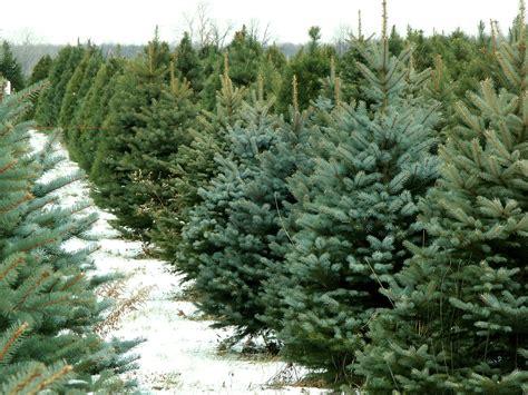 northeast ohio christmas tree farms