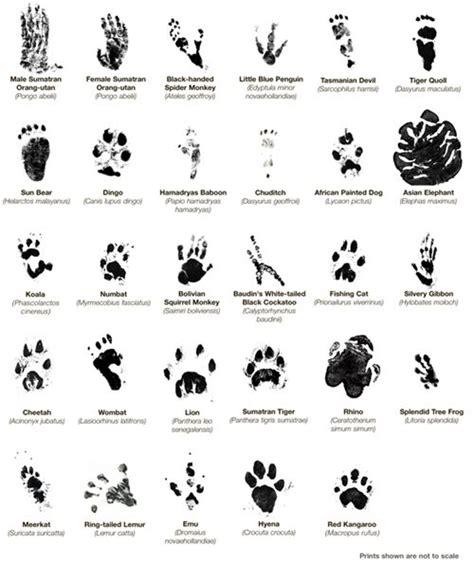 tattoo animal tracks animal paw prints wildlife pinterest search animals