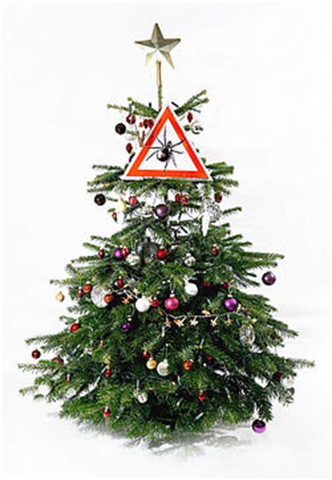 zecken weihnachtsbaum kuriose fakten zecken de das zecken informationsportal
