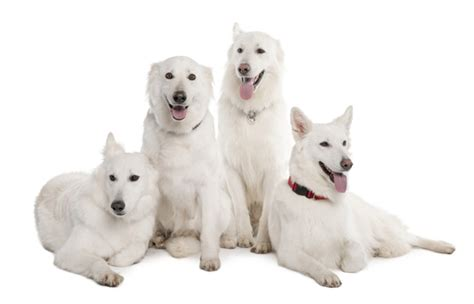 names for white dogs white names naming dogs
