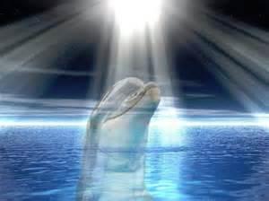 Can Blind People Swim Moon Stop Cetacean Captivity