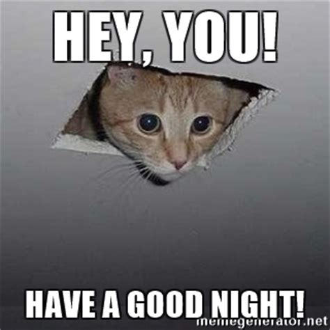 Goodnite Meme - goodnight cat