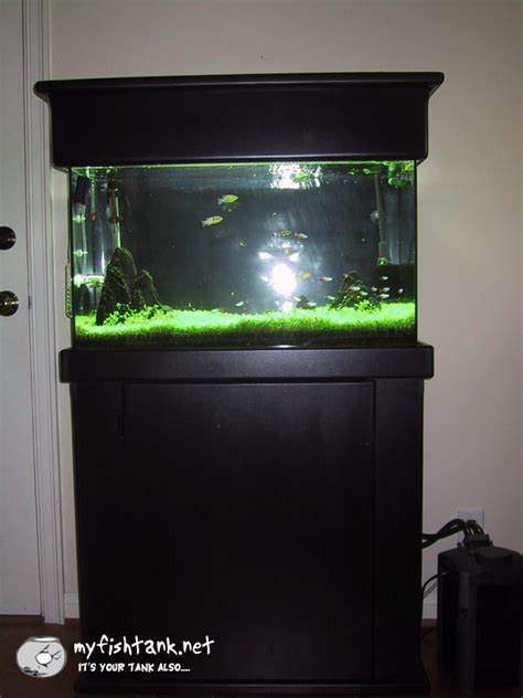 29 gallon fish tank light my 29 gallon planted freshwater tank