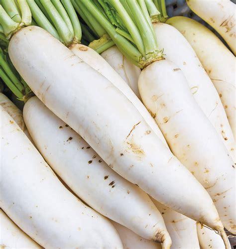 miyashige white neck daikon radish seeds