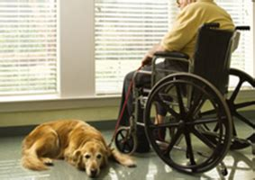 service vs therapy service dogs nation