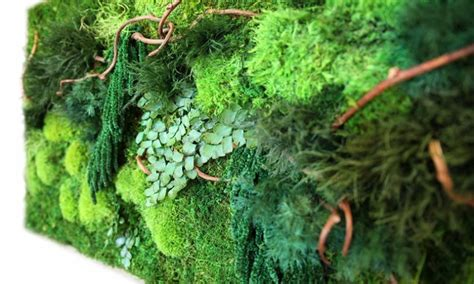 artisan moss wall art inhabitat green design