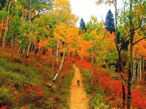 fall colors colorado bill jenn gehr pictures