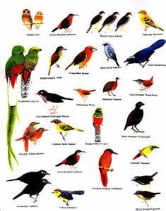 ملف كامل عن الطيور