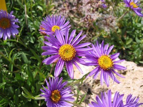 piante per giardini pensili le piante per un giardino pensile ville e giardini