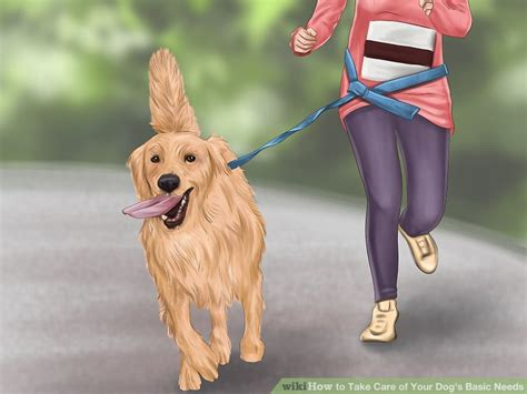 how to care for a puppy how to take care of your s basic needs with pictures