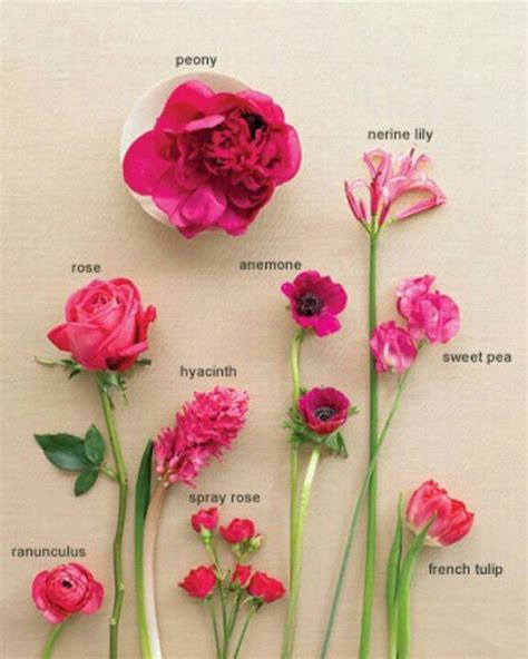 flower names flowers pinterest gardens pink and names