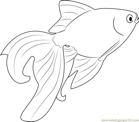 beautiful goldfish coloring page free other fish