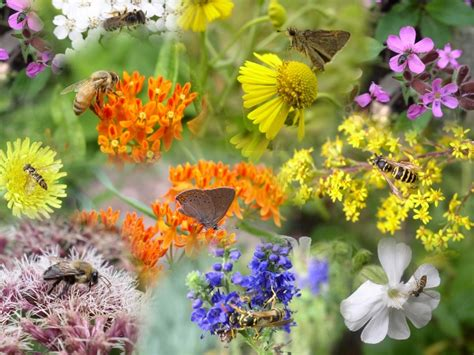 insects and flowers the pollinators and other flower visitors a field guide for young people polinizador s blog