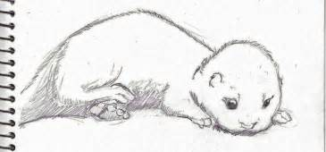 baby otter sketch by legendarypossum on deviantart