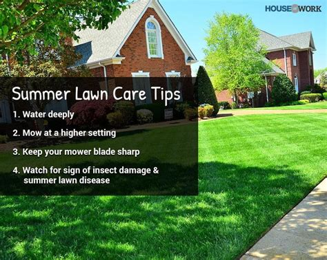 summer lawn care tips keep your lawn looking at its best in summer by mastering