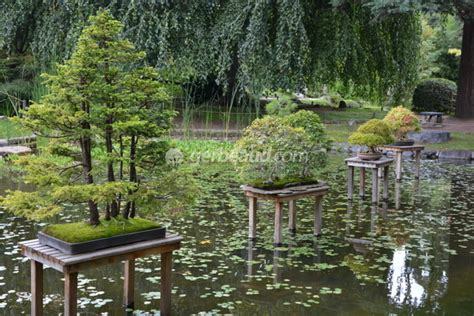 Attrayant Video Bonsai Jardin Japonais #1: jardin-japonais-bassin-bonsai.jpg