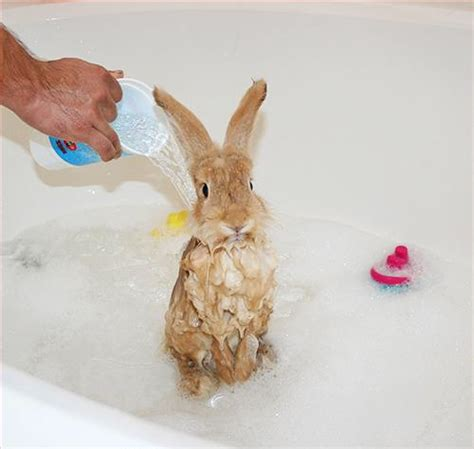 17 best images about 90s bathtime on 17 best images about bunny bath time on posts bunnies and be