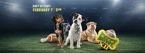 puppy bowl adoption puppy bowl adoption event and viewing held at asheville brewing feb 7