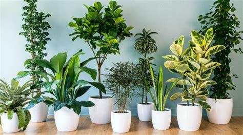 precios de plantas de interior plantas de interior precios trendy se diferencia bastante