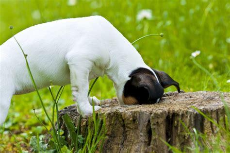 alimenti naturali per gatti anifit cibo naturale per cani e gatti prodotti per cani