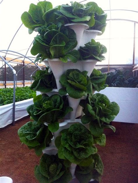 Hydroponics Vertical Garden Hydroponic Tower Choose The Best Get Started With Ease