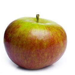 green apple british and 8853001941 malus domestica cox orange frag den apfel