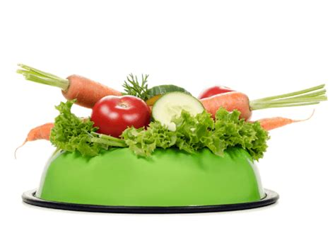 what fruits and vegetables can dogs eat healthy and recommended gsd diet routine shepped