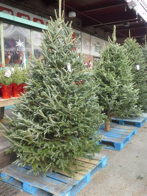 where can i buy a christmas tree in brooklyn