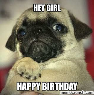 Pug Birthday Meme - birthday pug