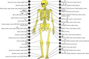 Bone structure in human body anatomy chart body