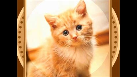 cute cat pictures youtube