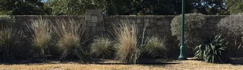Landscape Architect Georgetown Tx Georgetown Tx Commercial Landscaping Lawn Care
