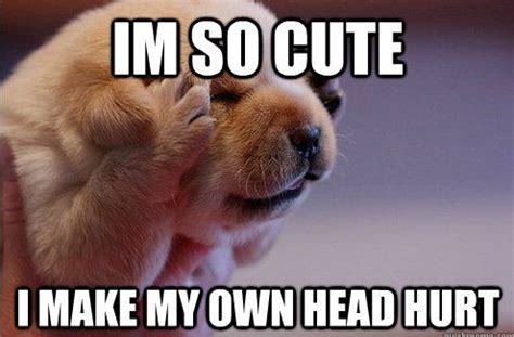 Cute Puppies Meme - cute puppy spring memes