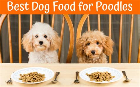 best food for dogs best food for poodles guide in 2018 us bones