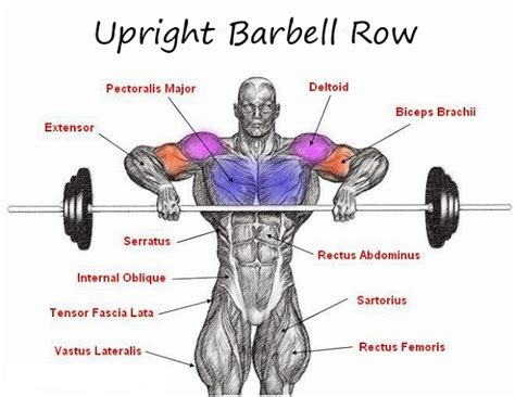barbell exercises that suit beginners all bodybuilding