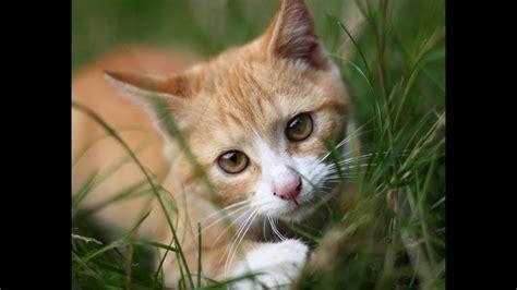 Cha T comment jouer avec chat et solution chat qui mord ou