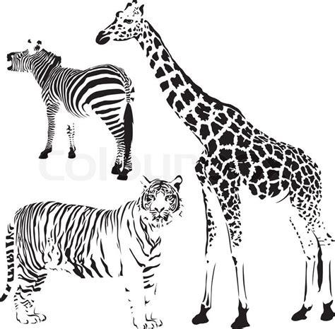 herbivorous animals coloring page afrikanische gestreift und fleckig tiere vektorgrafik
