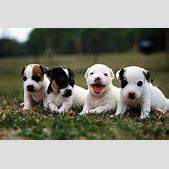 صور كلاب...