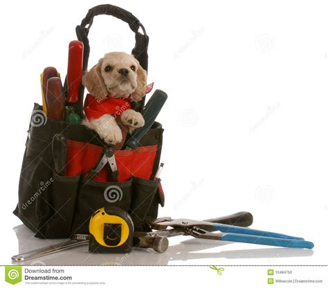 puppy kit puppy in tool kit stock photo image 10484750