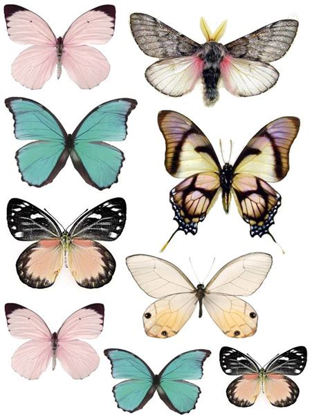 printable butterfly stickers swirlydoos forums images graphics butterflies