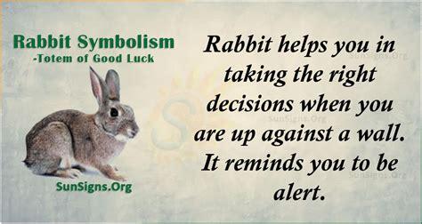 rabbit symbolism totem  good luck sunsignsorg