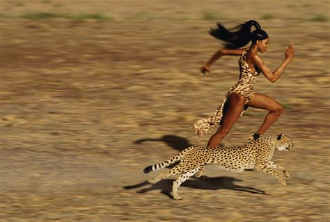 imagenes de animales rapidos los seres m 225 s r 225 pidos del planeta el pensante